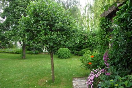 Bäume Für Kleine Gärten kleiner garten baum die schönsten einrichtungsideen